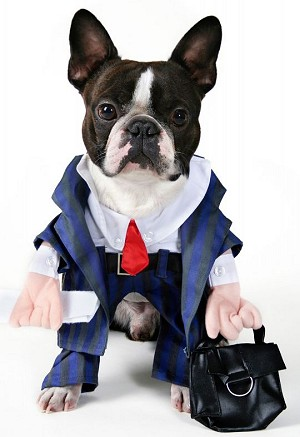 boston_terrier_costume