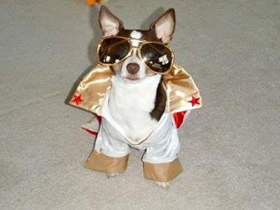 perro-disfrazado-elvis-3